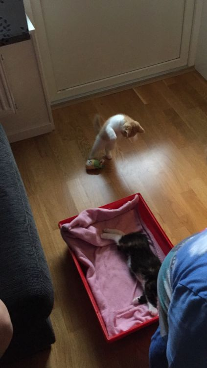 2 katt ungar säljes