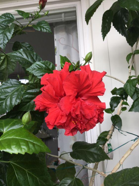 Stor blomma