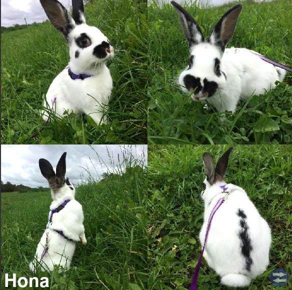 Kaninungar/ungdjur