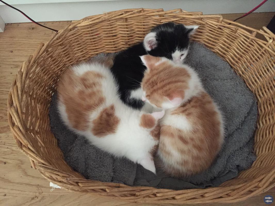 Tre små charmtroll