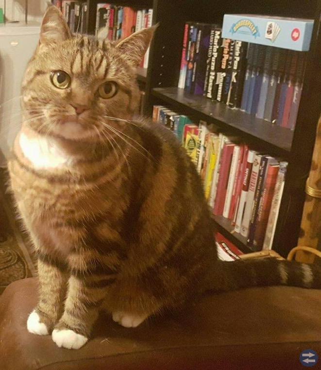 Katt bortsprungen från Rosenkälla