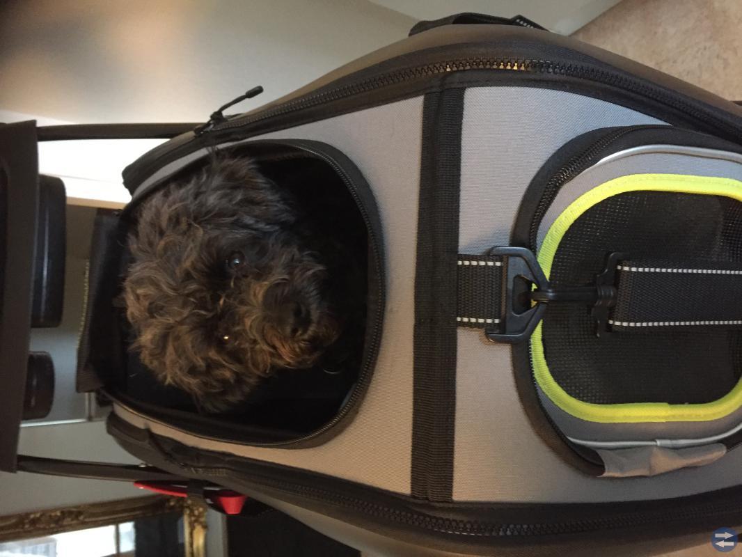 Hund/kattvagn på hjul
