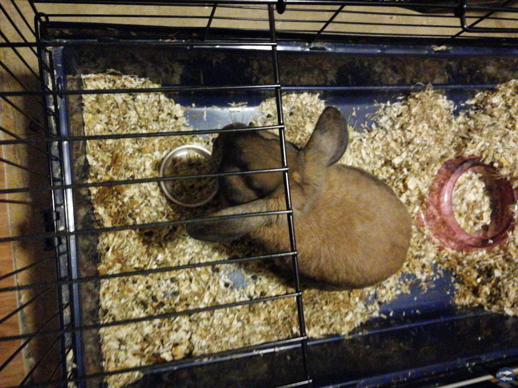 Kanin med tillbehör