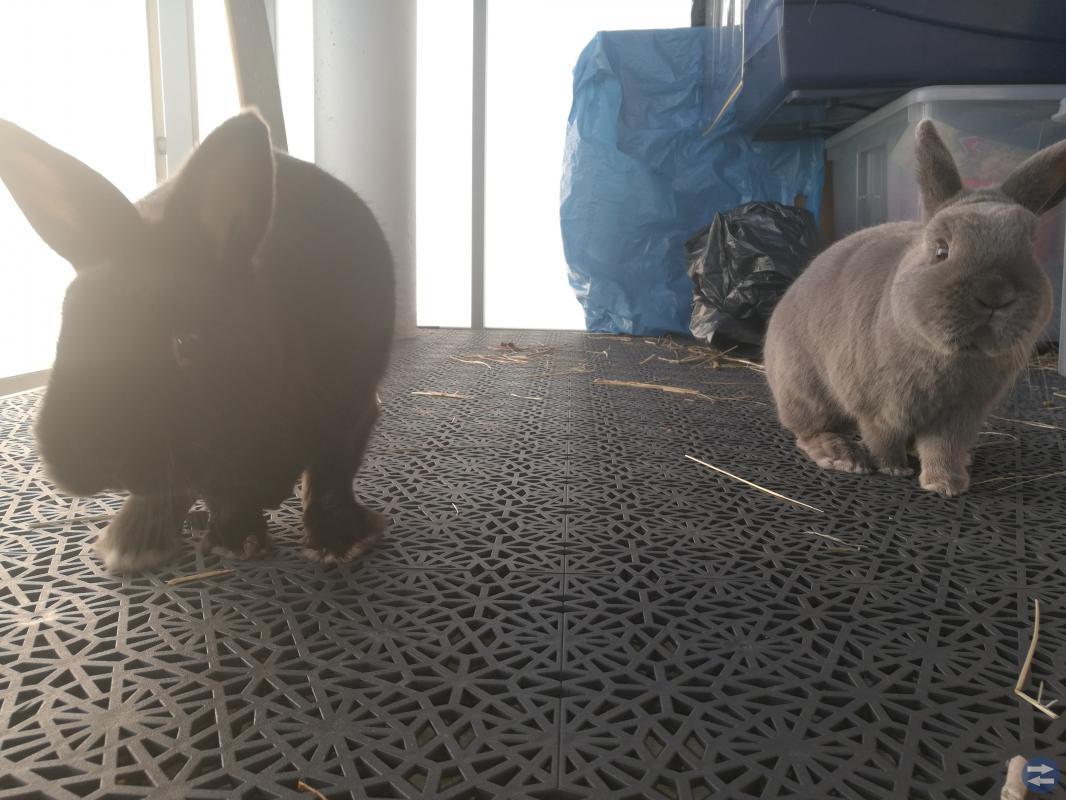 Två jättegulliga kaninbröder