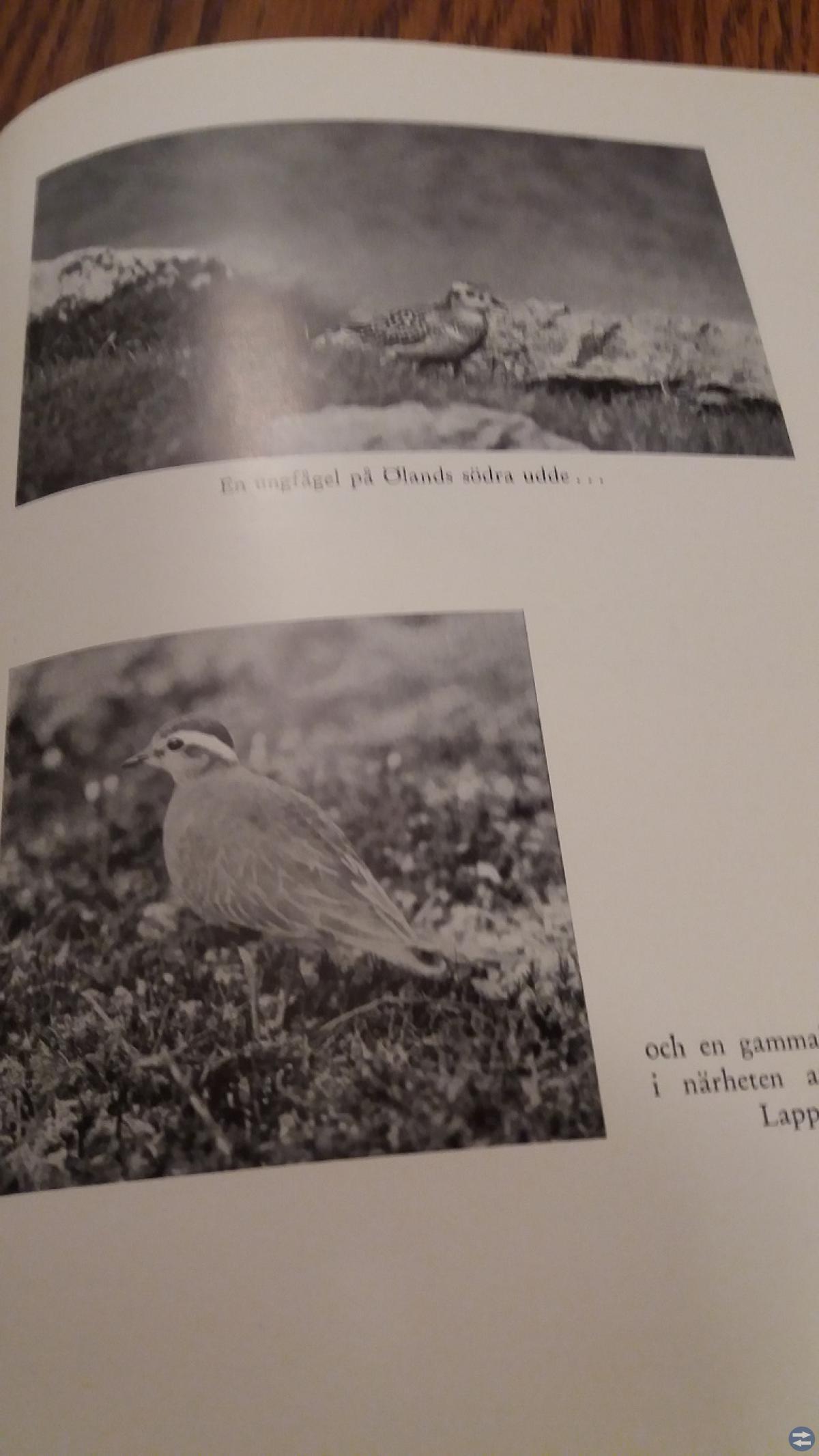 Victor Hasselblads bok 'Flyttfågelstråk'