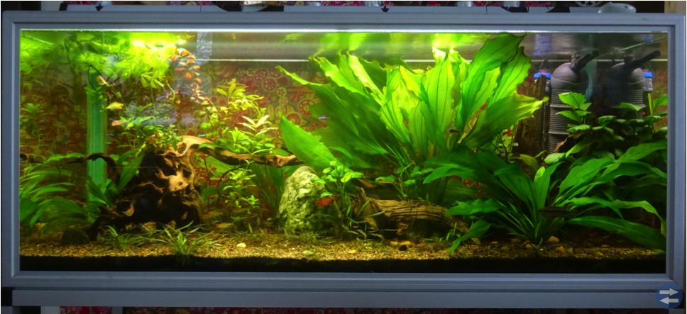 220 L akvarium med fiskar och tillbehör