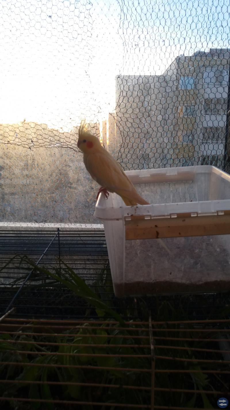 Fåglar , fågelburar och  kaninbur
