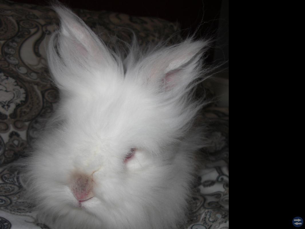 Vår underbara rumsrena kanin  Marshmallow