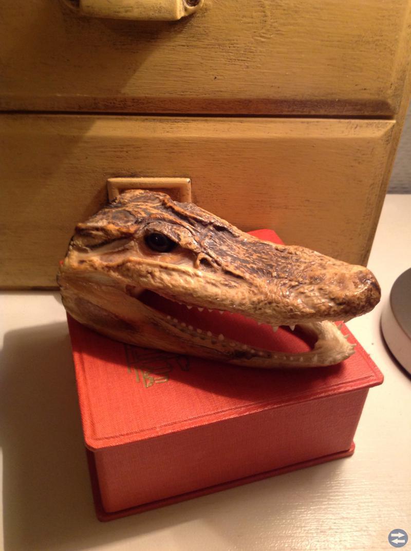Museiföremål krokodilhuvud