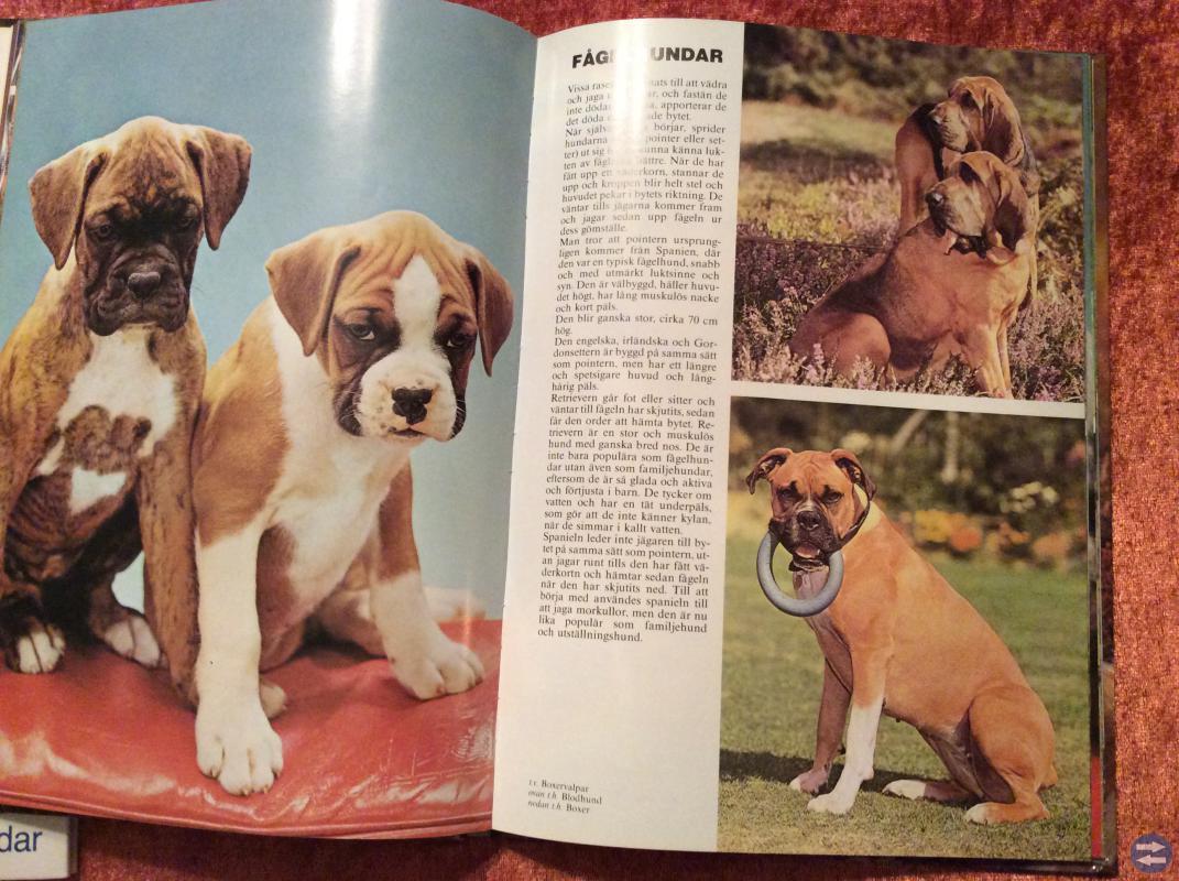 Hundböcker