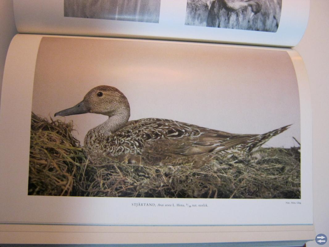 Våra fåglar i Norden