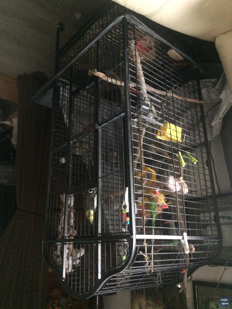 Nymfparakiter med bur