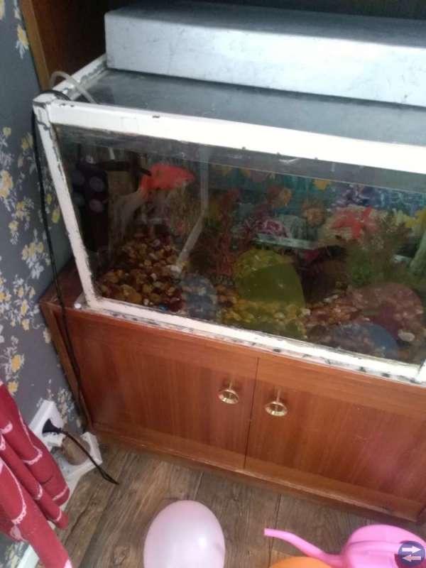 Akvarium med en guldfisk och syrepump