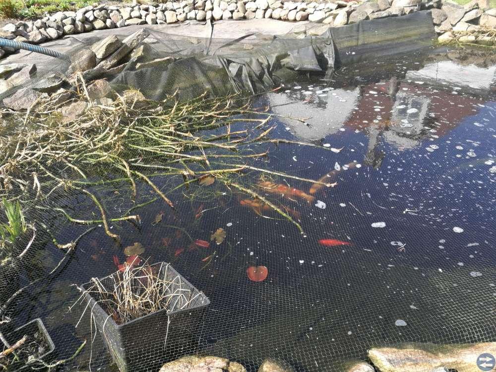 Guldfiskar växter reningsverk till damm