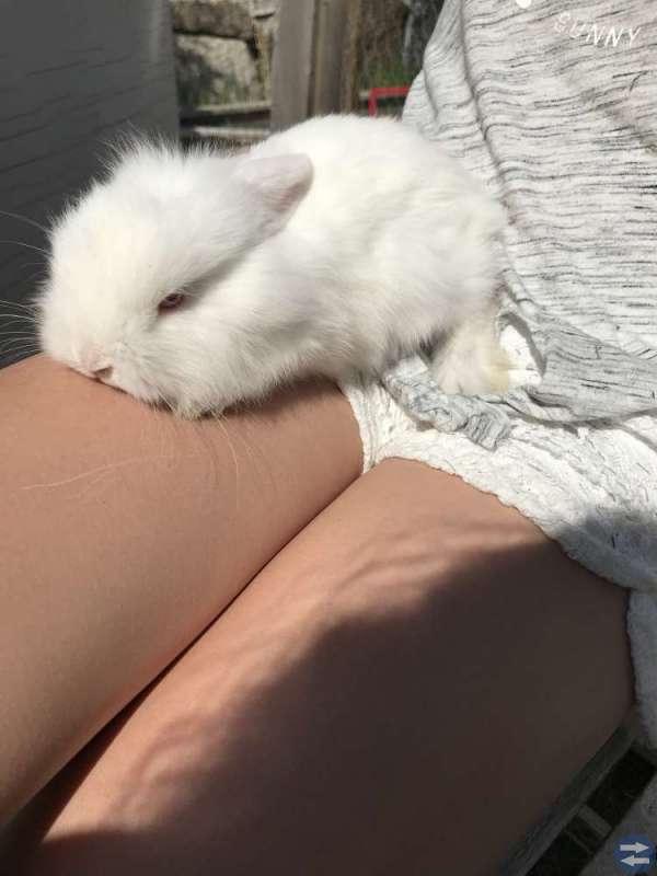 Kaninunge