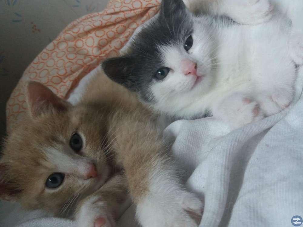 3 små kattungar
