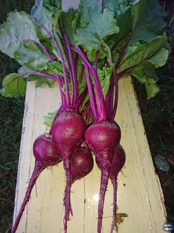 Hallon & Grönsaker