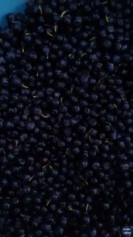 Nyplockade rensade blåbär säljes.