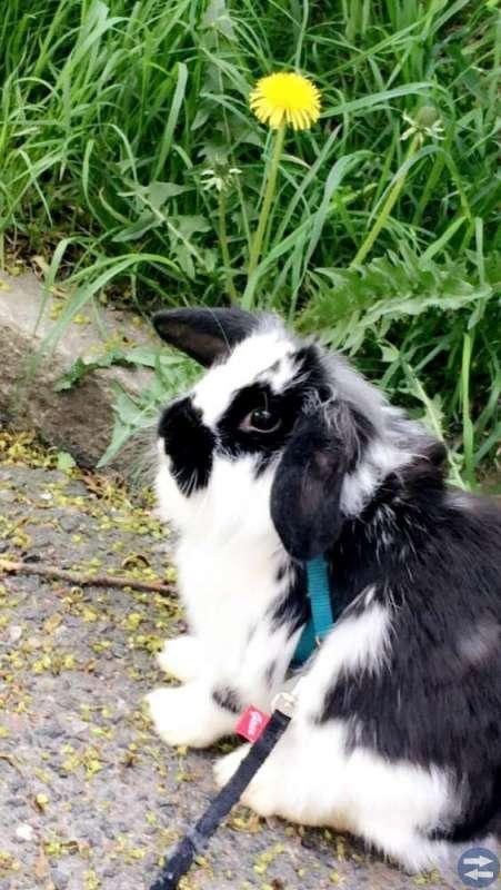 Säljer kanin