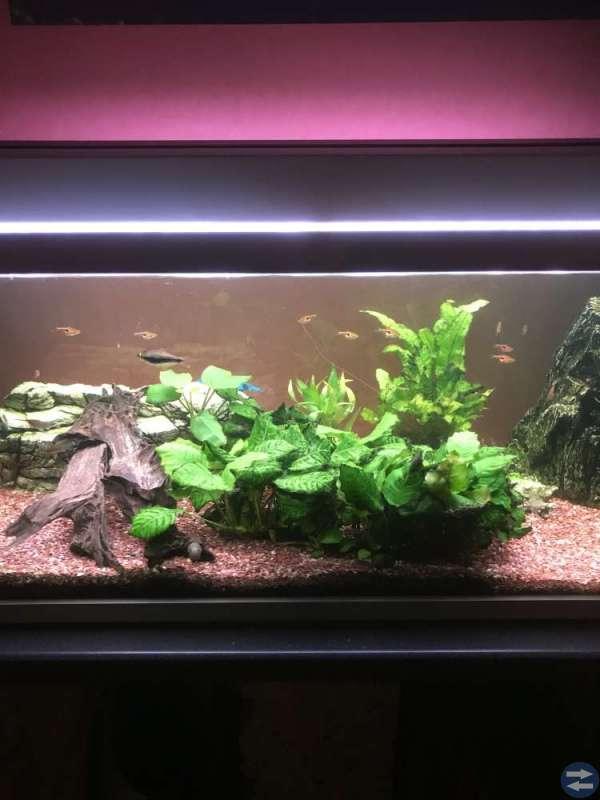 Akvarie 220 liter komplett