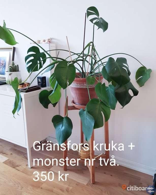 Monstreor