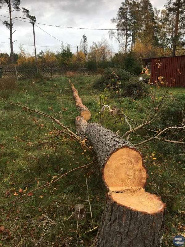 Timmer/träd