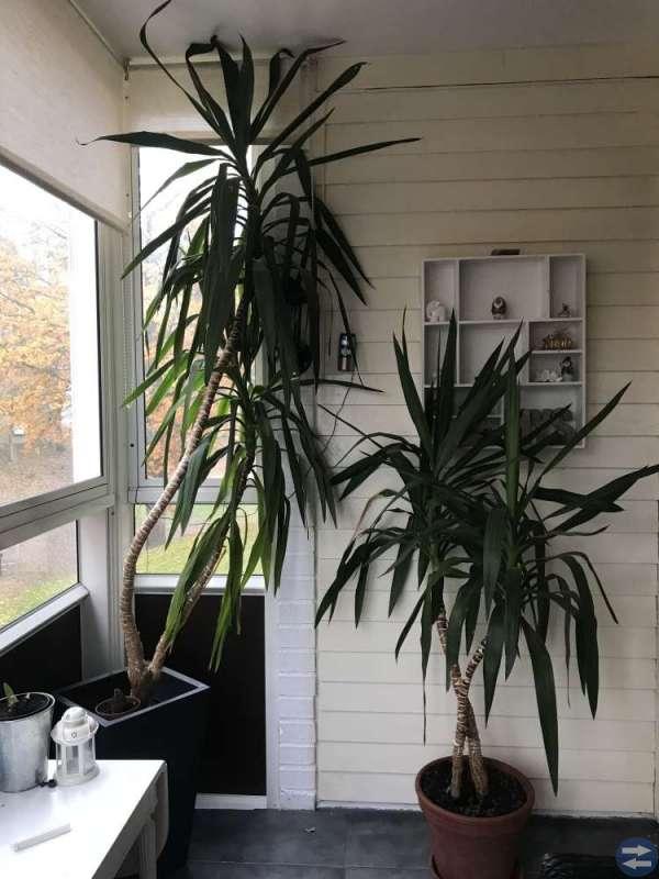 Växter plantor palmer