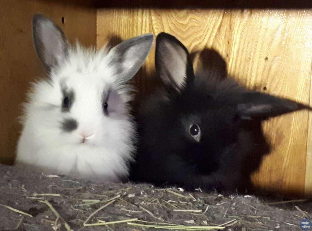 Kaniner leveran klara 6e Dec 2018