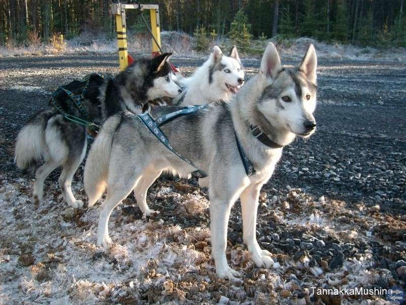 Hundträning och utflykter.