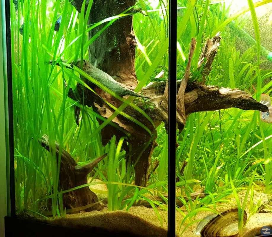 Diverse akvarie växter