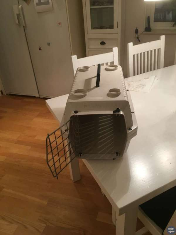 Transportbur för katt