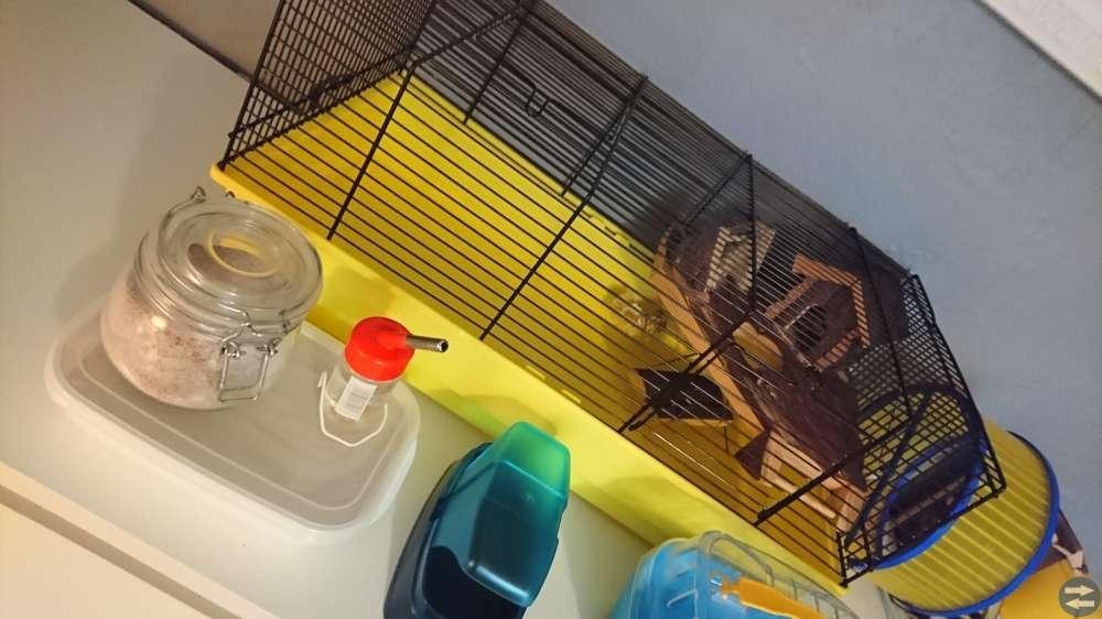 Hamster & tillbehör