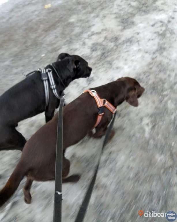 Hunddagis/hundvakt