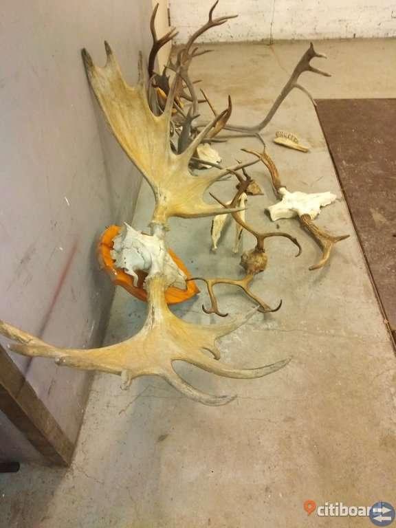 Diverse djurhorn