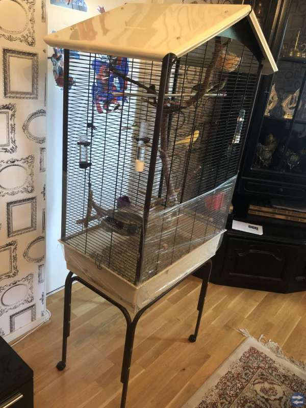 Vi säljer kanariefåglar 5st