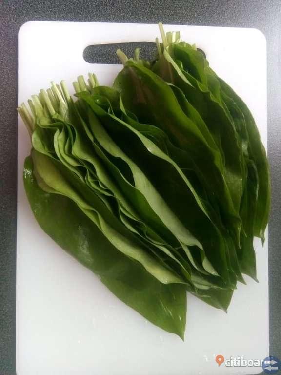 Ramslök säljes färsk - fryst - torkad