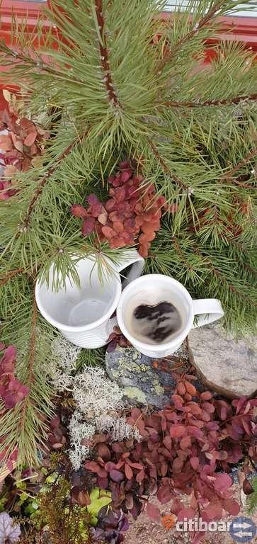 Muggar kaffemuggsr hjärtmugg